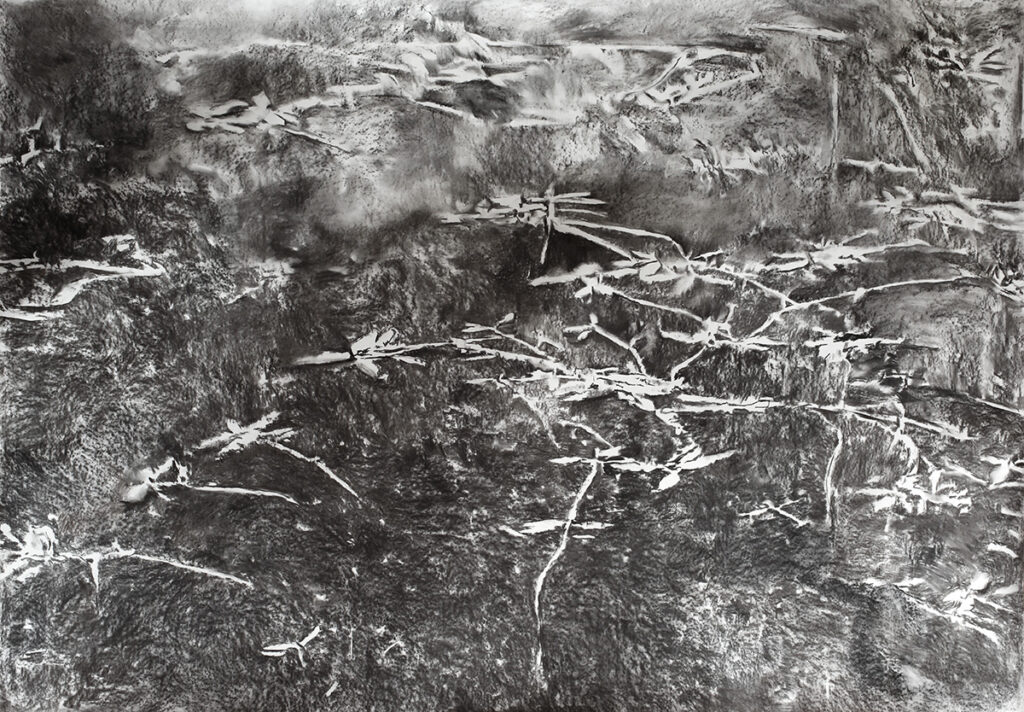 Charcoal drawing of trees