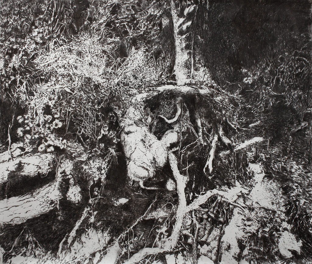 Black and white drawing of trees and roots